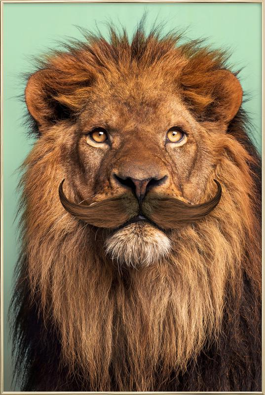 Bearded Lion Poster in Aluminium Frame