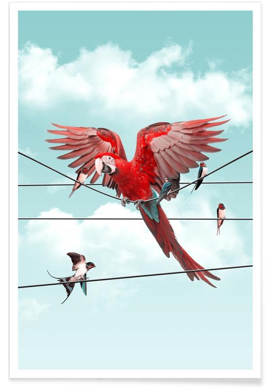 Perroquets, Colourful Stranger affiche