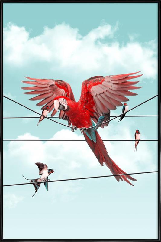 Colourful Stranger ingelijste poster