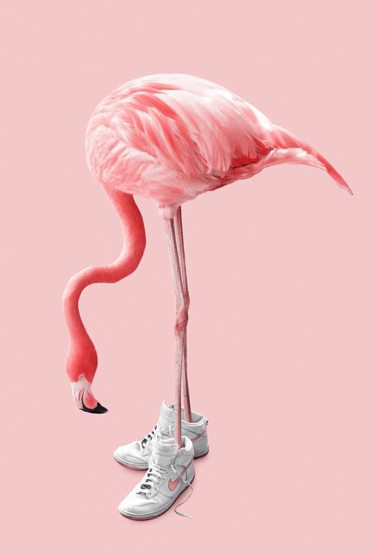 Sneaker Flamingo Aluminium Print