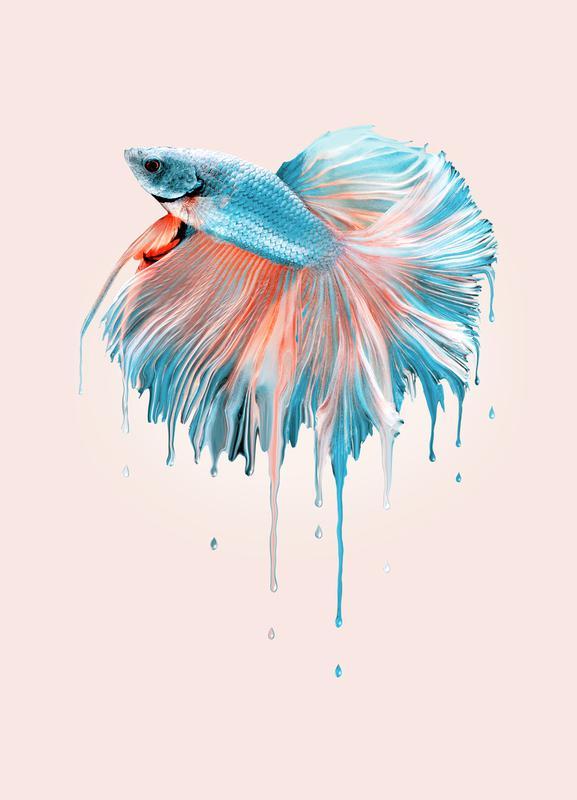 Melting Fish Canvas Print