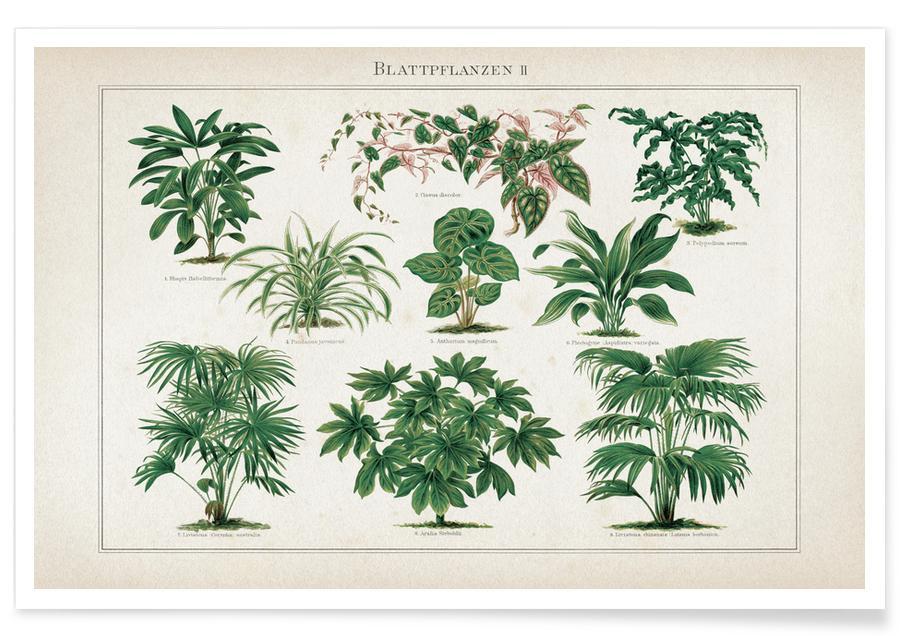 Feuilles & Plantes, Vintage, Meyers 1 Blattpflanzen 2 affiche