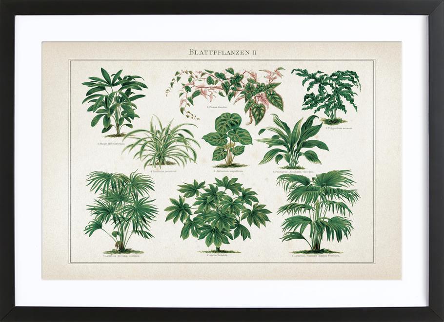 Blattpflanzen 2 - Meyers ingelijste print