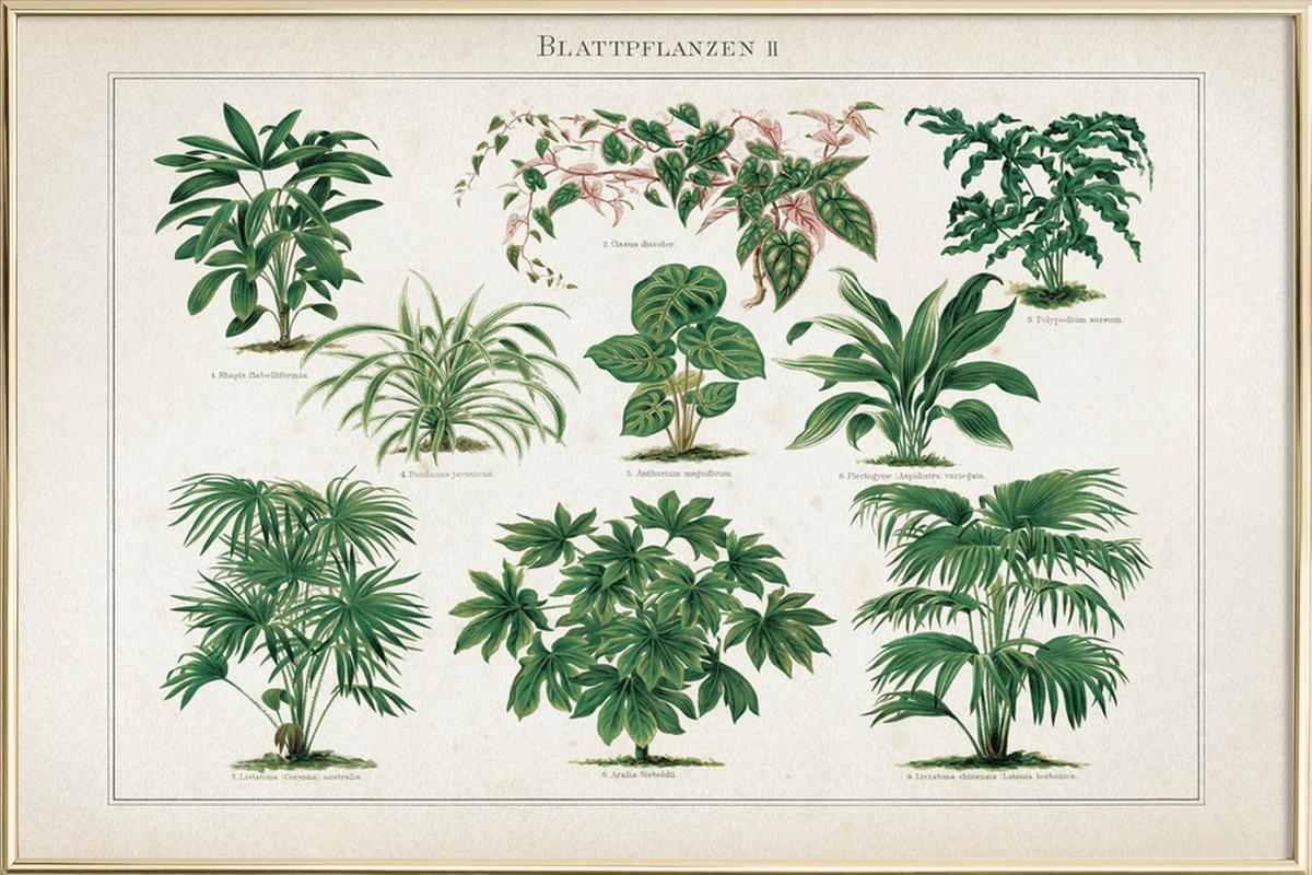 Blattpflanzen 2 - Meyers poster in aluminium lijst