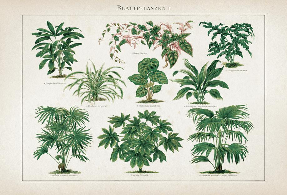Blattpflanzen 2 - Meyers -Acrylglasbild