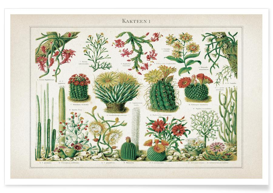 Cactussen, Vintage, Meyers 1 Kakteen 1 poster