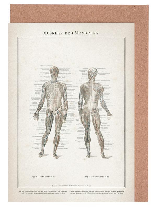 Vintage, Meyers 7 Muskeln des Menschen -Grußkarten-Set