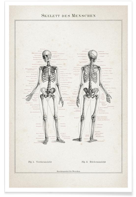 Skelett des Menschen - Meyers -Poster