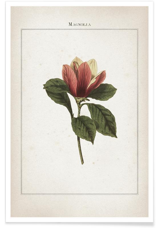 Vintage, Extinct 1 Magnolia affiche