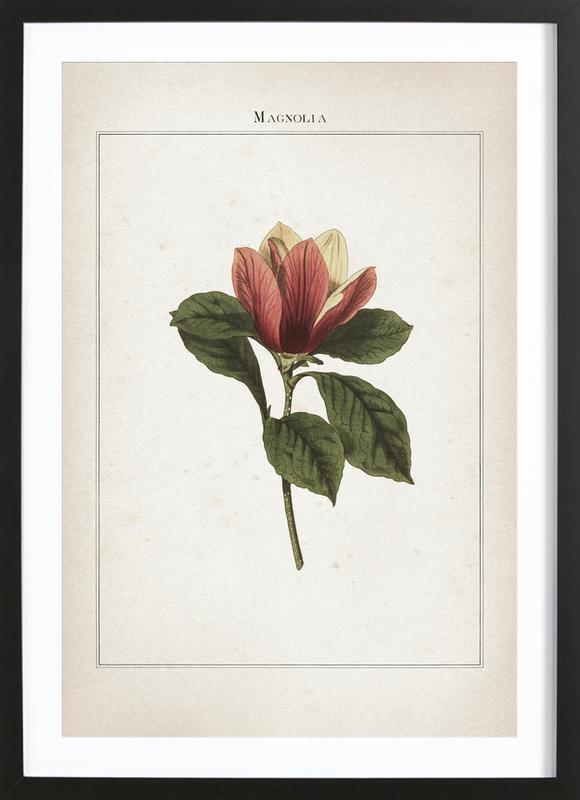 Magnolia - Extinct Poster i träram