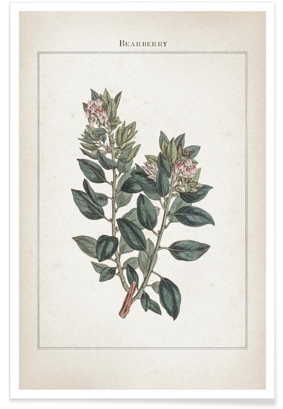Vintage, Extinct 1 Bearberry Plakat