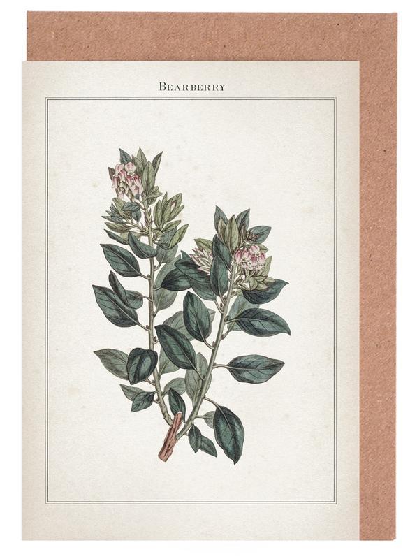 Vintage, Extinct 1 Bearberry -Grußkarten-Set