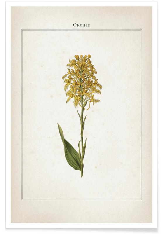 Vintage, Extinct 1 Orchid poster
