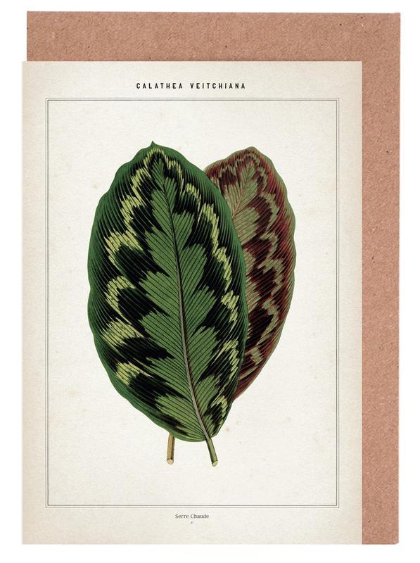 Blätter & Pflanzen, Houtte 1 Calathea Veitchiana -Grußkarten-Set