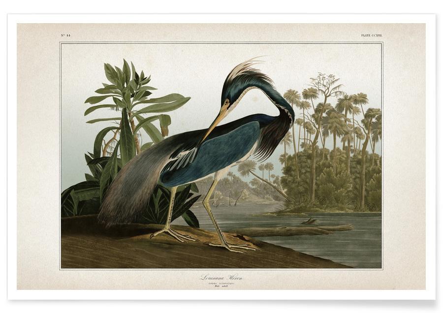 Grues, Audubon 2 Great Louisiana Heron affiche