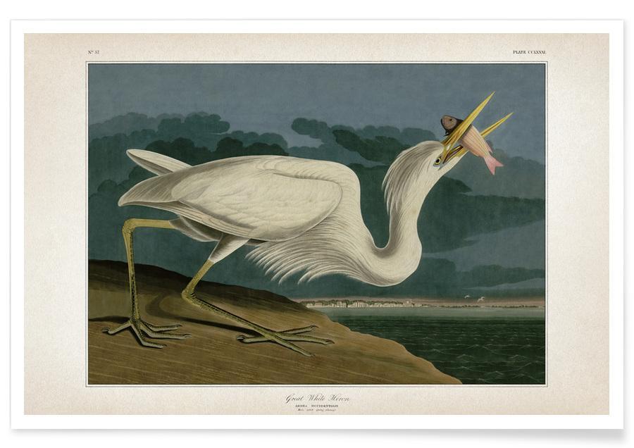 Cranes, Audubon 2 Great White Heron Poster