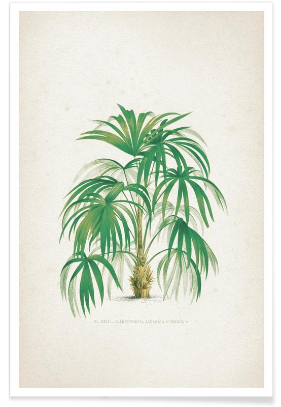 Feuilles & Plantes, Kerchove 4 Les Palmiers 24 affiche