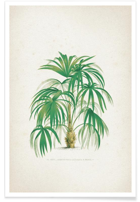 Leaves & Plants, Kerchove 4 Les Palmiers 24 Poster