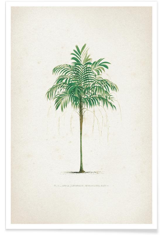 Bladeren en planten, Kerchove 3 Les Palmiers 2 poster