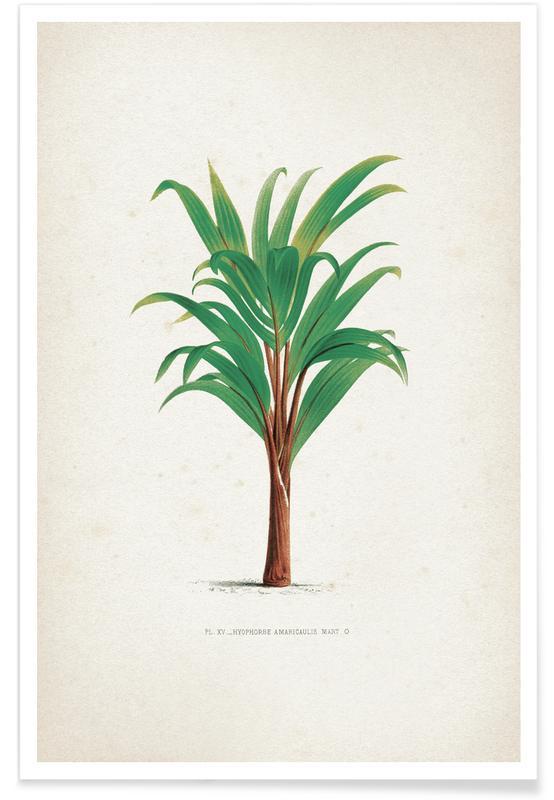 Bladeren en planten, Kerchove 3 Les Palmiers 15 poster