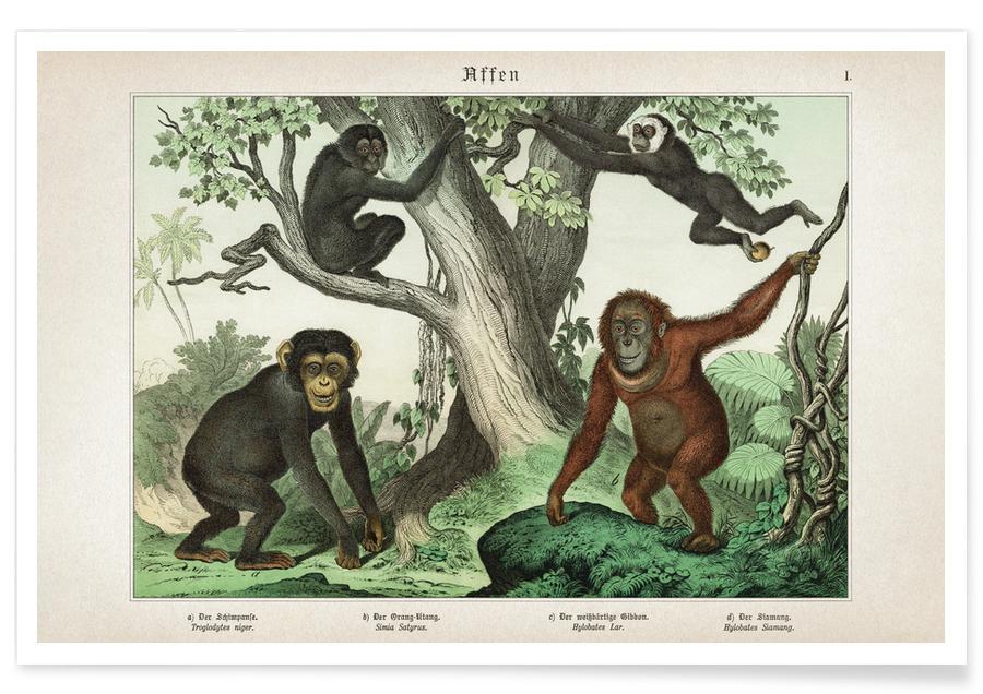 Blätter & Pflanzen, Schubert 3 Affen 1 -Poster