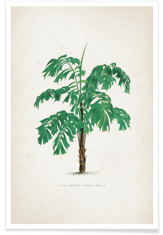 Bladeren en planten, Kerchove 4 Les Palmiers 39 poster