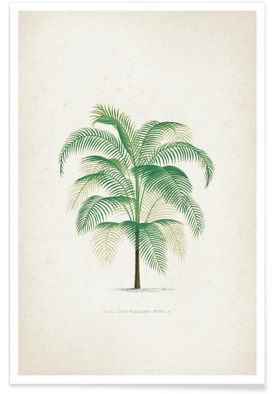 Leaves & Plants, Kerchove 4 Les Palmiers 40 Poster