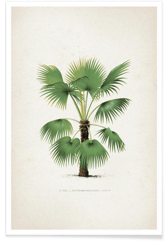 Leaves & Plants, Kerchove 3 Les Palmiers 26 Poster