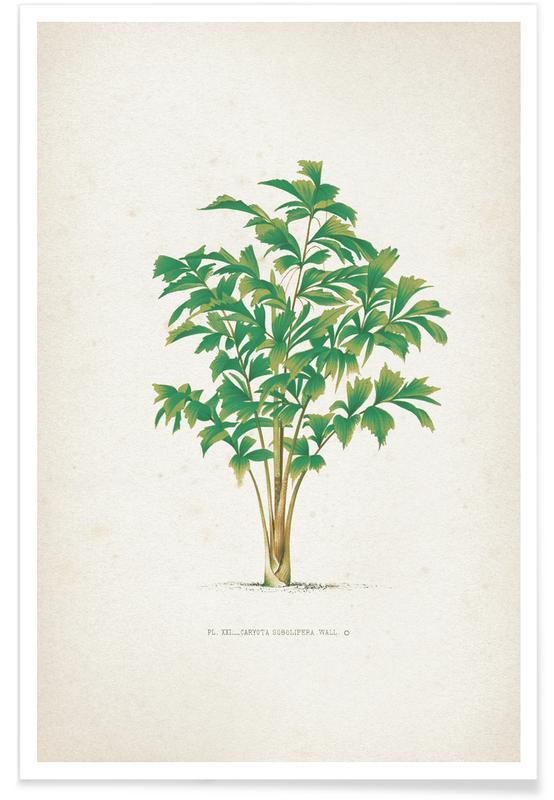 Bladeren en planten, Kerchove 3 Les Palmiers 21 poster