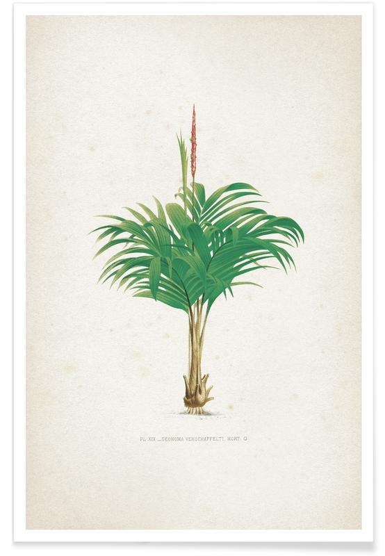 Bladeren en planten, Kerchove 4 Les Palmiers 19 poster