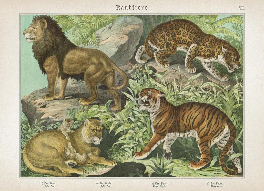 Raubtiere 7 - Schubert Canvas Print
