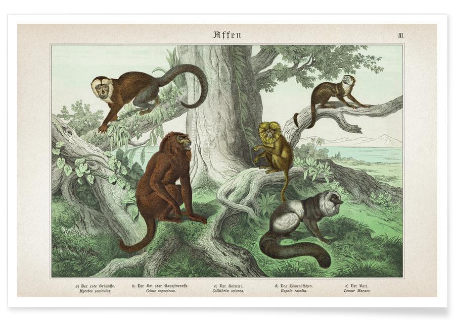 Affen 3 - Schubert -Poster