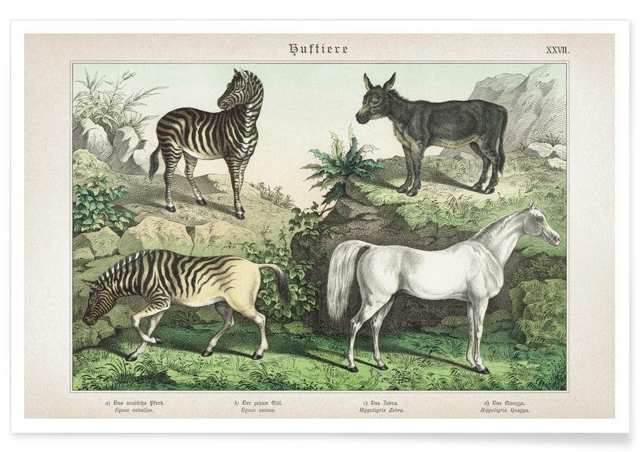Vintage, Horses, Schubert 2 Huftiere 27 Poster