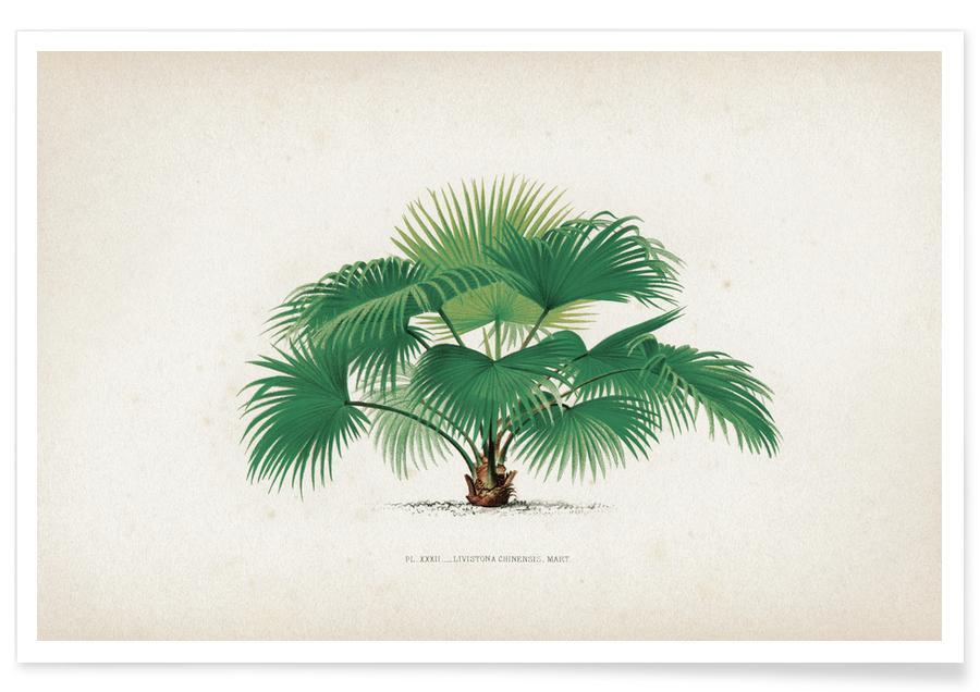 Palmbomen, Vintage, Kerchove 1 Les Palmiers 32 poster