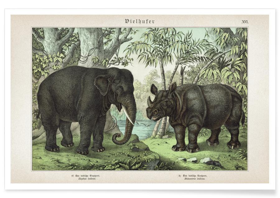 Vintage, Éléphants, Schubert 4 Vielhufer 16 affiche