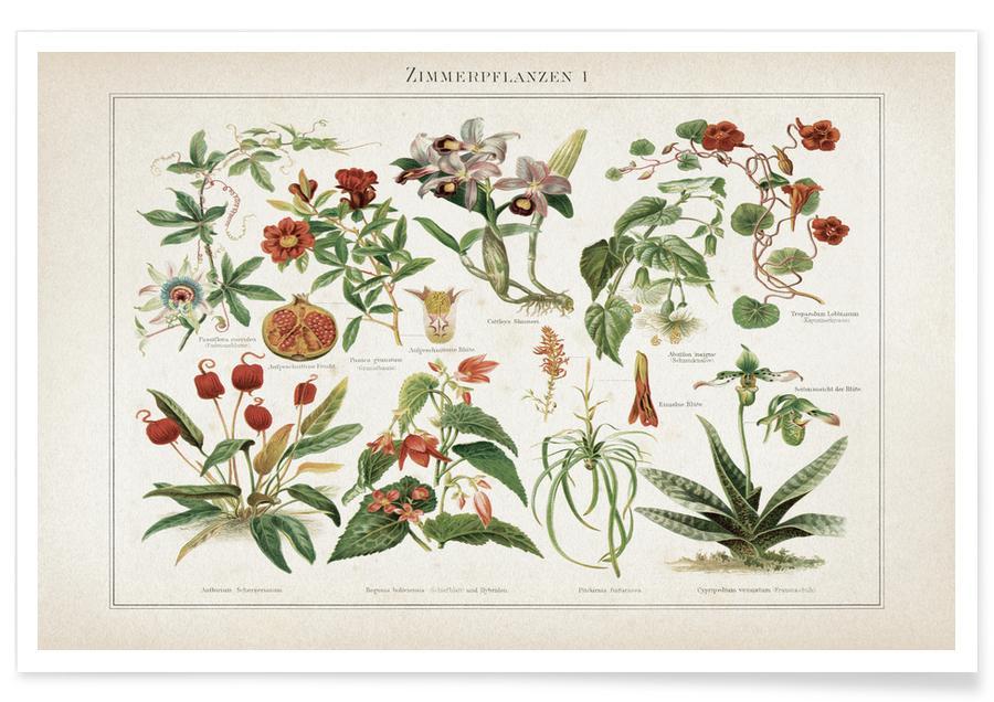Vintage, Plantes d'intérieur - Meyers affiche