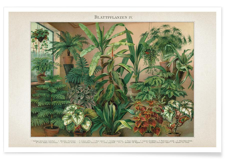 Leaves & Plants, Blattpflanzen 4 - Meyers Poster