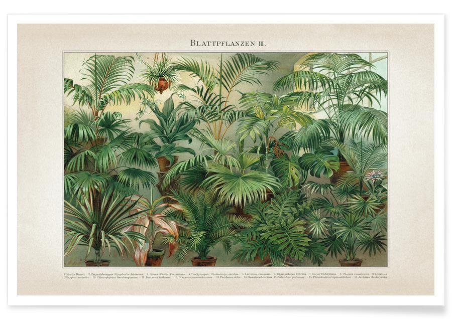 Blattpflanzen 3 - Meyers affiche