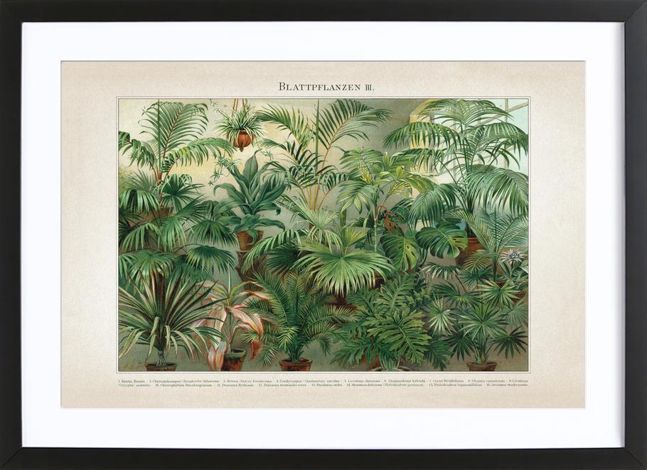 Blattpflanzen 3 - Meyers ingelijste print