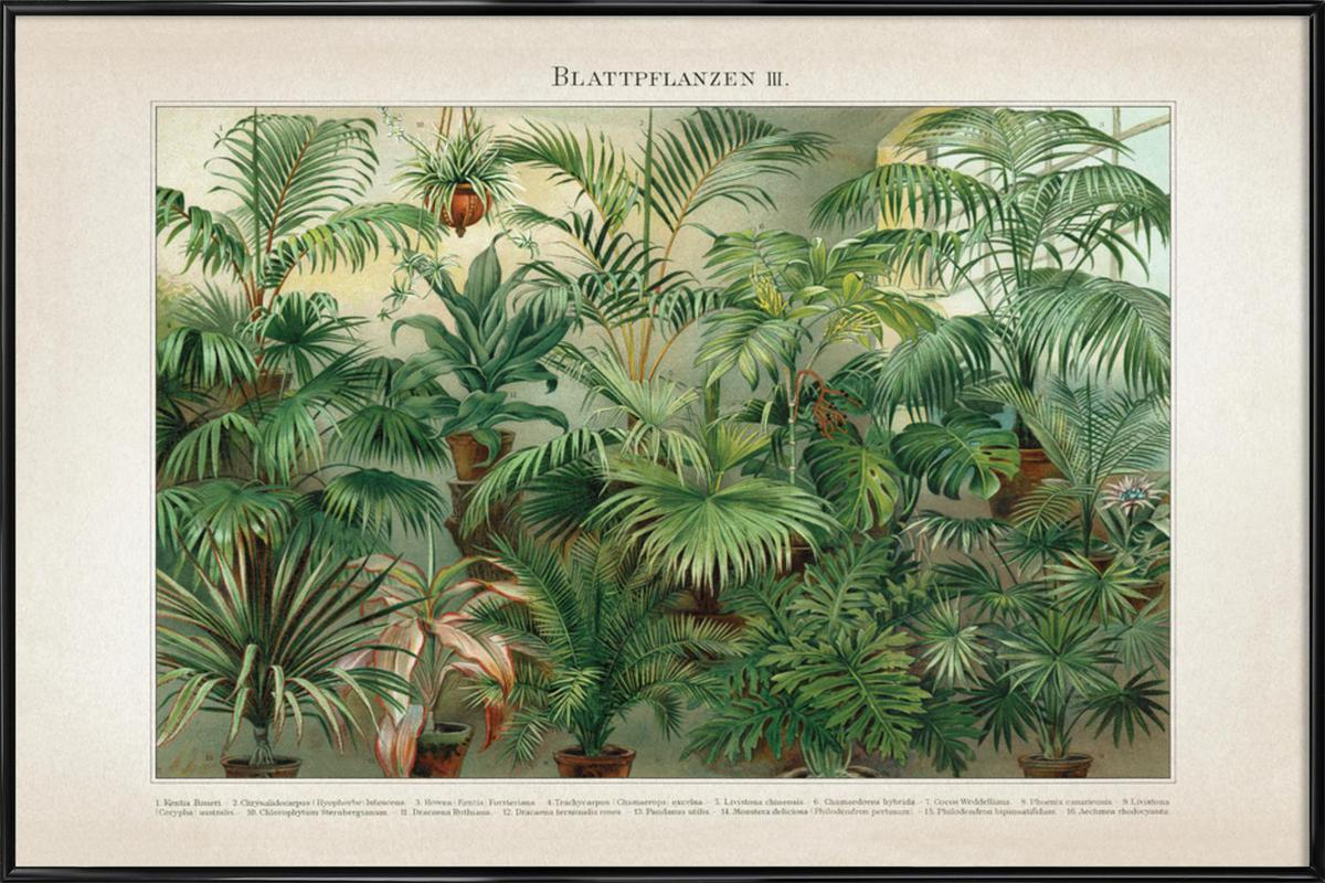 Blattpflanzen 3 - Meyers ingelijste poster