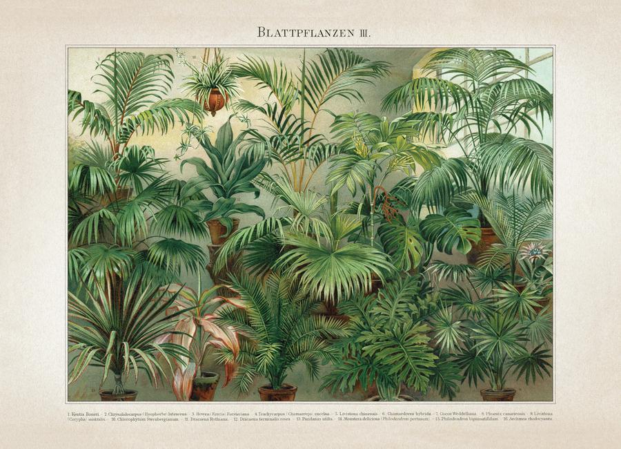 Blattpflanzen 3 - Meyers canvas doek