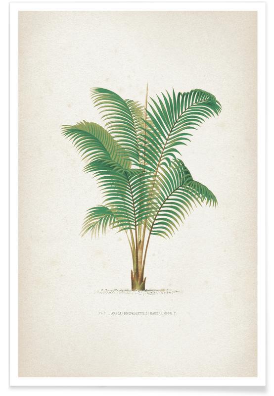 Les Palmiers 1 - Kerchove Poster