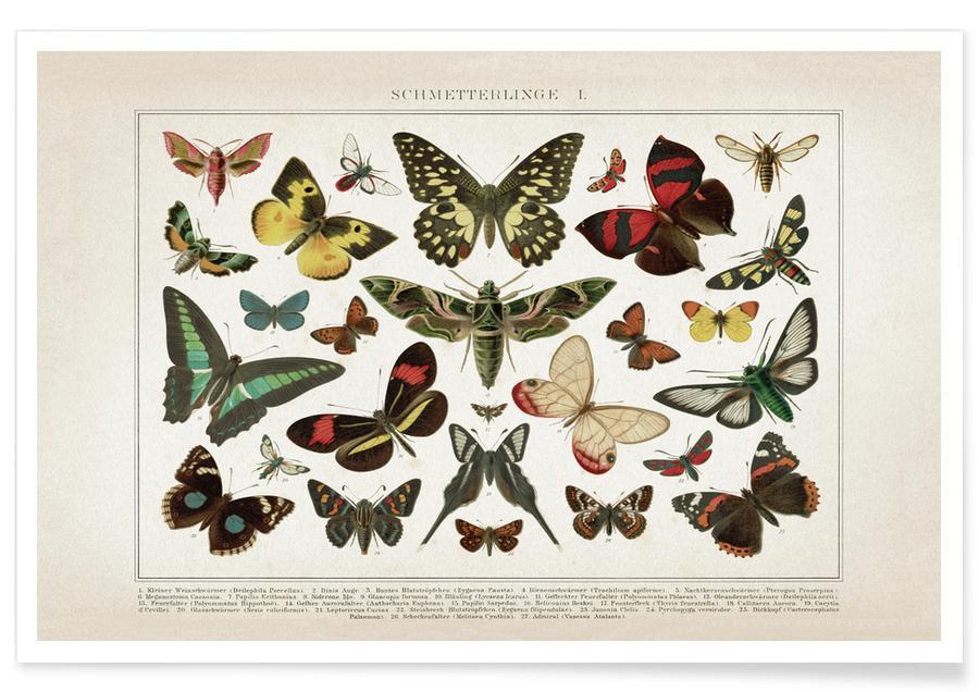 Vintage, Vlinders, Brockhaus - Vlinders poster