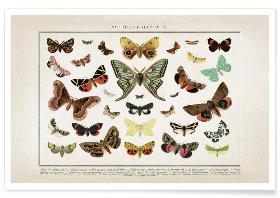 Butterflies, Vintage, Brockhaus 1 Schmetterlinge 2 Poster