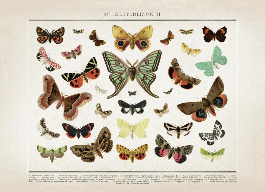 Schmetterlinge 2 - Brockhaus -Leinwandbild