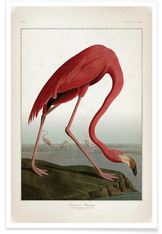 Flamingos, Vintage, Audubon - American Flamingo Poster
