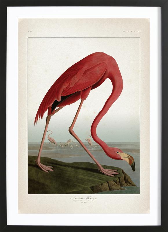 American Flamingo - Audubon -Bild mit Holzrahmen