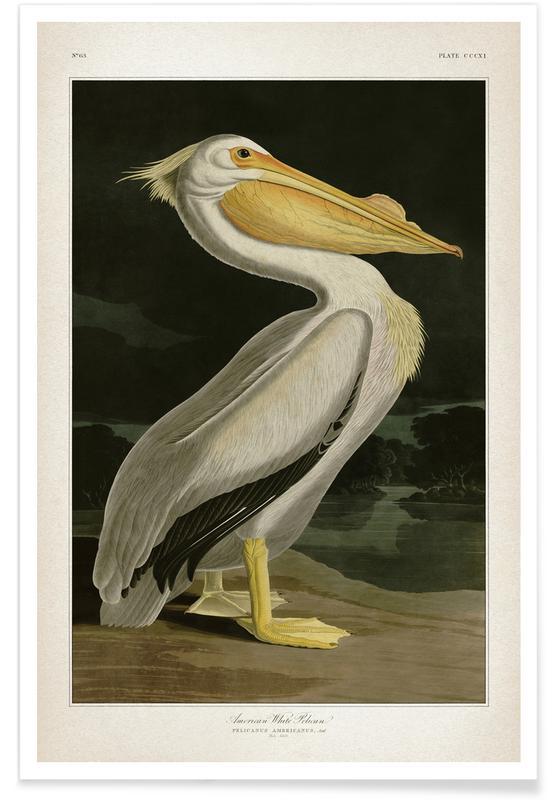 Pélicans, Vintage, Audubon - Pélican blanc affiche