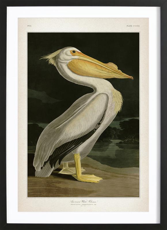 American White Pelican - Audubon -Bild mit Holzrahmen