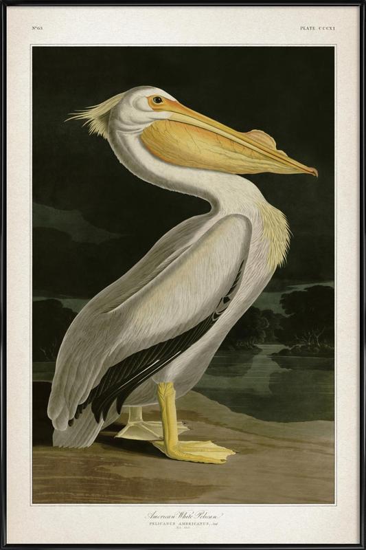 American White Pelican - Audubon Framed Poster